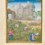 Mois de Septembre La récolte Folio 9v Simon Bening Bréviaire Grimani Bibliothèque Marciana à Venise
